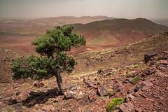 ⵉⴷⵓⵔⴰⵔⵏⵓⴰⵟⵍⴰⵙ, Morocco (::ErWin) Tags: africa afrika atlas maroc marokko جبالالأطلس ⵉⴷⵓⵔⴰⵔⵏⵓⴰⵟⵍⴰⵙ explored explore ⵉⴷⵓⵔⴰⵔⵏⵡⴰⵟⵍⴰⵚ