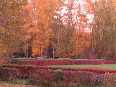 autumn, autumn, ... (VERUSHKA4) Tags: canon europe russia moscow city cityscape park parkkuskovo season autumn october vue view ville nature tree path car yellow red orange trunk bush grass green meadow branch day colour color outdoor astoundingimage