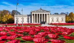 "Kunstaktion ""Never Again"" (MichaelHofmann2703) Tags: königsplatz münchen never again art kunstaktion mohnblumenfeld poppies"