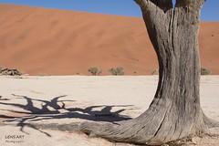 Kameldornbaum/ Camelthorntree (LENS.ART Photographie) Tags: baum kameldorn camelthorn namib namibia sossusvlei deadvlei nikon d7200 schatten landschaft natur landscape nature wüste desert shadow baumstamm