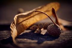 Autumn Starts 02 - alpha7iii - sigma 70 mm macro (DonKamilo1984) Tags: autumn leafs leaf leaves blätter blatt herbst bild orange braun stimmung mood