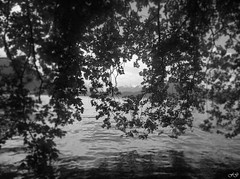Sous les feuillages (Fred Gg) Tags: annecy auvergnerhônealpes france fra lac paysage noiretblanc