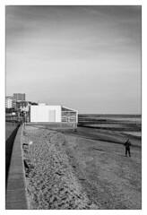 Dog walk (exreuterman) Tags: film 35mm ilford delta100 adox fx39ii southend westcliff chalkwell essex uk canon eos1n 50mm f12l