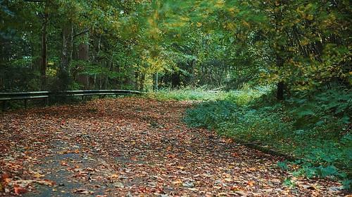 Autumn Years 3