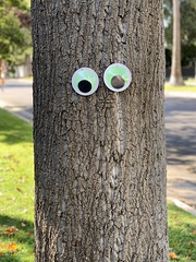 284/365: This tree was making eyes at me