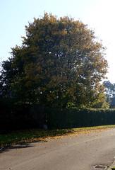 (Landanna) Tags: fallingintoautumn fall farverafefterår efterår efterårsfarve herfst herfstkleuren autumn autumncolours