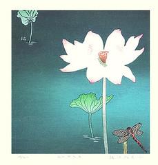 Sacred lotus (Japanese Flower and Bird Art) Tags: flower sacred lotus nelumbo nucifera nelumbonaceae kieko tsurusawa modern woodblock print japan japanese art readercollection