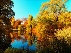 Fall foliage colors in the castle park of Eutin (Ostseetroll) Tags: deu deutschland eutin eutinerschlosspark geo:lat=5413320510 geo:lon=1062366168 geotagged schleswigholstein herbst farben zauber fall foliage colors castlepark autumn olympus em5markii