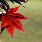 fall red foliage thumbnail