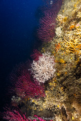 IMG_1312 (davide.clementelli) Tags: diving dive dives padi immersione immersioni ampportofino portofino liguria friends amici underwater underwaterlife sottacqua