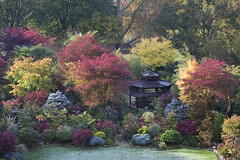 Garden colours of autumn (Four Seasons Garden) Tags: four seasons garden england english uk walsall colour foliage leaves 2017 flowers deciduous autumn conifer evergreen acers japanese maple marie tony newton red blue yellow green october palmatum frost