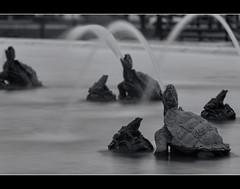 James Scott Memorial Fountain, Belle Isle, Detroit (Amarnath) Tags: blackwhitephotos bw 70d ef70200mmf28lisiiusm