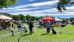 Shelton K-9 Festival 2018 (nomad7674) Tags: 2018 oronoque animal hospital k9 canine carnival sheltonct shelton ct connecticut dog dogs puppy puppies fair festival