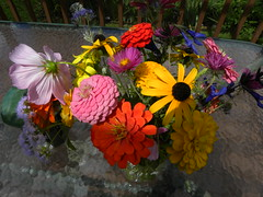 From the Garden (MadKnits) Tags: garden growing plants green harvest september zinnia flowers