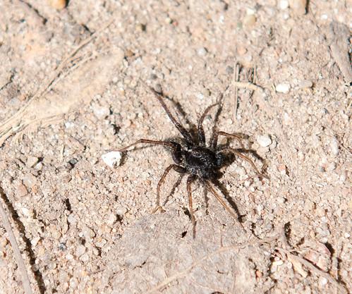 Spider ©  Andrey
