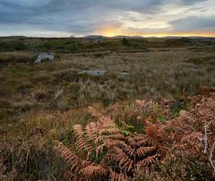 Bog (Phoenix Konstantin) Tags: sonya7 28mm sel28f20 sonyfe28f20 countydonegal moss bog