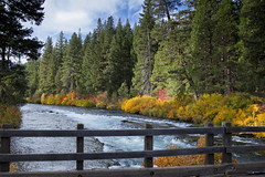 Fall color at Bridge over Metolius River, Oregon (icetsarina) Tags: metoliusriver oregon fall leaves october water bridge foliage