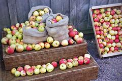Photo of Harvest