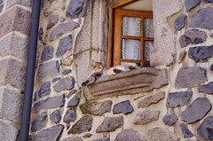 30 août 2018 - Auvergne, Cantal,Murat (paspog) Tags: auvergne cantal france murat août august 2018 chat cat katze fenêtre window fenster