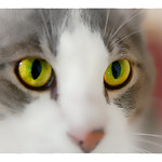 Look into my Eyes... thumbnail