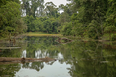 Angkor, Cambodia (Experilensing) Tags: angkor angkorwat templosdeangkor channel canal water reflection reflejo reflejoenelagua reflectioninthewater agua cambodia camboya