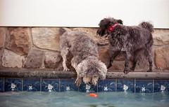 pool pups (bpwilby) Tags: 100speed 35mm ektar film kodak kodakektar100 nikon nikonf4 usa c41 kodakektar negative newjersey nj printfilm stoneharbor