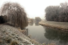Morning at the river (Yirka51) Tags: mirroring willow wood winter water tree stream river quay plant pathway path nature leaves leaf lagoon frost hoarfrost grass forest flora curve countryside country cold bush