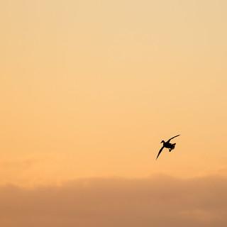 canard au reveil