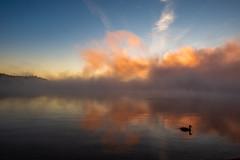 Duck on the lake (Dazarazmataz) Tags: lake lakeoftworivers duck wildlife wild nature naturephotography landscape reflection peaceful sunrise clouds algonquin animalplanet animal canada