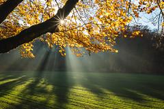 Strahlengang (Joachim S.) Tags: ast baum blätter dunst gegenlicht herbst laub sonnenstrahlen wald wiese