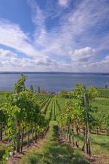 Weinberg am Bodensee (Baspherical) Tags: clouds badenwürttemberg landschaft landscape fotopoint view pentaxian k1 lakeconstance lake germany holiday bluesky sky bodensee pentax