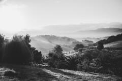 Morning has broken (mripp) Tags: art vintage retro old landscape landschascht basque baskenland spanien schwarzweiss mono monochrom sony voigtlander meditation calm ruhig beruhigung