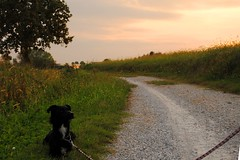 Penny al tramonto - Penny at sunset (stella.iloveyou) Tags: gaggiano bassapadanamilanese
