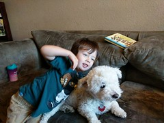 Boy and Dog (earthdog) Tags: 2018 googlepixel pixel androidapp moblog cameraphone boy dog scooter pet animal liveanimal poodlemix house home couch