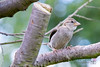 Garden Bird-1231