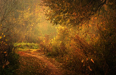 Road carved into the forest (tom.sk) Tags: forest autumn road path painting digitalpainting poland