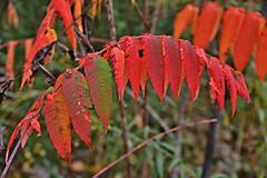 Don Valley Brick Works Park, Toronto, ON (Snuffy) Tags: fall autumn seasons donvalleybrickworkspark toronto ontario canada