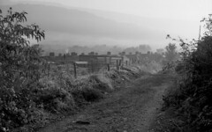 After breakfast (Fray Bentos) Tags: mist autumnmorning shanghaigp3 thevalleys lane ilfordilfotecddx southwales yashica635 1910mins24°c