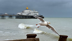 Eastbourne Pier (Pixelkids) Tags: eastbourne eastsussex england eastbournepier pier seagull sea waves bird sky ocean