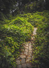 (MCarrabs) Tags: welwyn glen cove new york landscape abandoned urbex exploration explore black white leaves trees graffiti