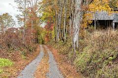Montgomery Road (Back Road Photography (Kevin W. Jerrell)) Tags: autumn autumncolors fall nikond7200 backroadphotography colorful countryroads rural ruralscenes leecountyvirginia rosehillva seasonal