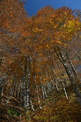 Massif de l'Aigoual (Michel Seguret Thanks for 12,9 M views !!!) Tags: france lozere nature fall autumn automne michelseguret nikon d800 pro arbre tree saison season massifcentral