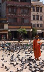 The pigeon whisperer (Bloggy24) Tags: nepal kathmandu mountains nature landscape travel scenery