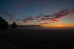 _DSC9488.jpg (thomasresch) Tags: sonneaufgang sun nordhaide panzerwiese nebel hartelholz sunrise sonne