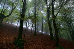 ubidea fog 1 (juan luis olaeta) Tags: paisajes landscape forest bosque basoa pagoa contraluz nieblas laiñoa fog foggy autumne udazkena otoño fujifilmxpro1 nature