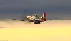 Mustang (EverydayTuesday) Tags: p51 p51d mustang rollsroyce merlin v12 reno nv nevada stead canon 80d 100400 propblur goldenhour