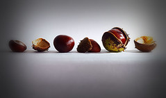 Conkers in a Row (Smiffy'37) Tags: conkers closeup nature vignette stilllife minimal minimalist