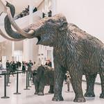 New Royal Alberta Museum thumbnail