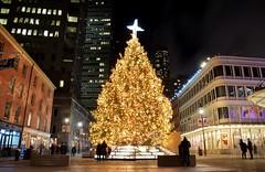 Holiday 2016, 12.03.16 (gigi_nyc) Tags: nyc newyorkcity holiday holiday2016 southstreetseaport christmas christmastree christmas2016