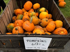 Buying Pumpkins (Lux Llama Productions) Tags: barn apple picking fall natick framingham lookout farms family couple 2018 apples many plenty lot hay leaf leaves crate box peach pear plant plants maple trees tree grass grape grapes bench orange picnic red